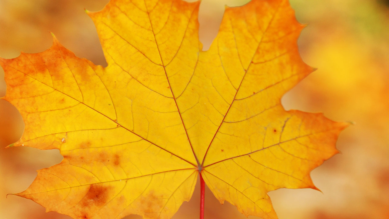 2018 Fall Leaf Collection Program