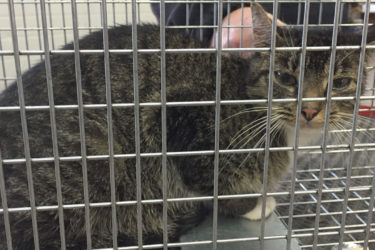 The female cat who was rescued Wednesday afternoon at Quinnipiac University. Photo courtesy of Quinnipiac University.
